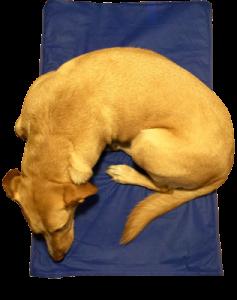 Cama térmica para animales domésticos