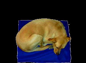All Pet calienta camas para mascotas
